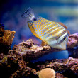 Underwater world — Stock Photo #6223912