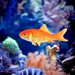 Stock Photo: Underwater world /with copy space/