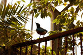 Exotic bird perched on fence — Stock Photo