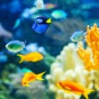 Tropical fish — Stock Photo #6363310