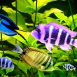 Tropical fish — Stock Photo #6363323