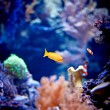 Tropical fish — Stock Photo #6363330