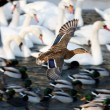 Waterfowl by the river - Stock Photo