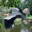 Stock Photo: Heron flying over lake and house