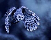 Flying owl — Stock Photo