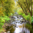 Photograph of the creek in the countryside — Stock Photo