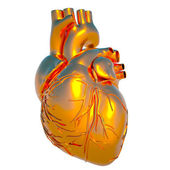 Model of human heart - heart of gold — Stock Photo