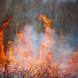 Grass fire - Stock Photo