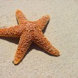 Starfish — Stock Photo #6134482