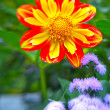Stock Photo: Colorful flower