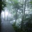 Bridge in foggy forrest — Stock Photo #6134314