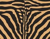 Tiger hud — Stockvektor