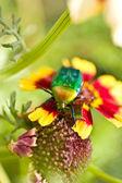 Bug on walk — Stock Photo