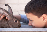 Boy holds caresses a gray rabbit inear the house — Stock Photo
