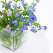 Forget-me-not — Stock Photo #6392484
