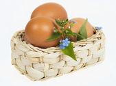 バスケットの卵 — ストック写真