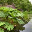 Stock Photo: Lake scene with exotic plants
