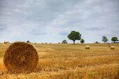 товары сена — Стоковое фото
