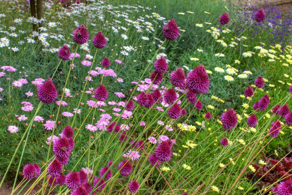 Flowers In An English Garden Stock Photo Debu55y 6267769