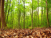 Green and wild nature, forest in Catalonia (Spain) — Stock Photo