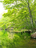 Green forest reflection on water. A lake in Catalonia (Spain) — Foto de Stock