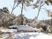 Coches cubiertos de nieve — Foto de Stock