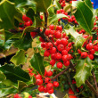 Stock Photo: Christmas holly berries close up
