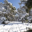 Snow covered forest in Barcelona - Stock Photo