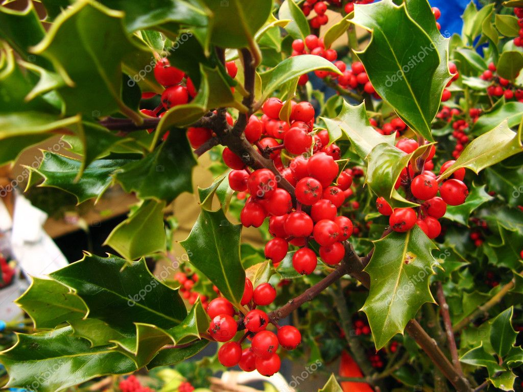 The Real Rhristians Holly Were Forbidden To Decorate With