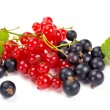 Stock Photo: Red and black currant