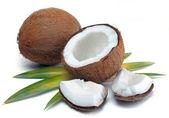 Noix de coco avec feuilles — Photo