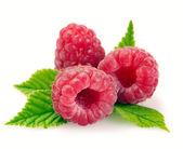 Raspberry with leaves — Stockfoto