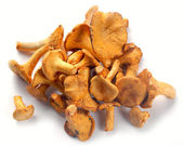 Mushrooms chanterelle — Stock Photo