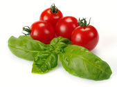Leaves of basil and tomatoes — Stock Photo