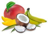 Tropical fruit — Stock Vector