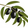 Black olives on branch — Stock Vector #6298480