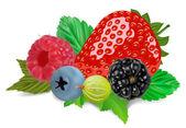 Summer berries — Stock Vector