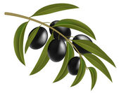 Black olives on branch — Stock Vector