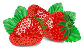 Strawberry isolated on white — Stock Vector