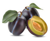 Plum and a half — Stock Vector