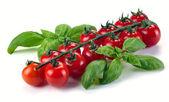 バジルとトマトの葉 — ストック写真