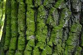 Verde bosco — Foto Stock