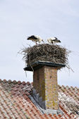 Ooievaars in nest — Stock Photo