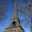 Eiffel tower, hide by tree, in paris - Stock Photo