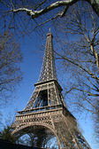 Eiffel tower, hide by tree, in paris — Stock Photo