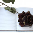 Notebook rose — Stock Photo