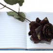 Notebook rose — Stock Photo