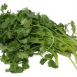 Coriander or Cilantro — Stock Photo