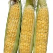 Three corn — Stock Photo