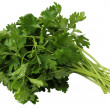 Stock Photo: Coriander or Cilantro